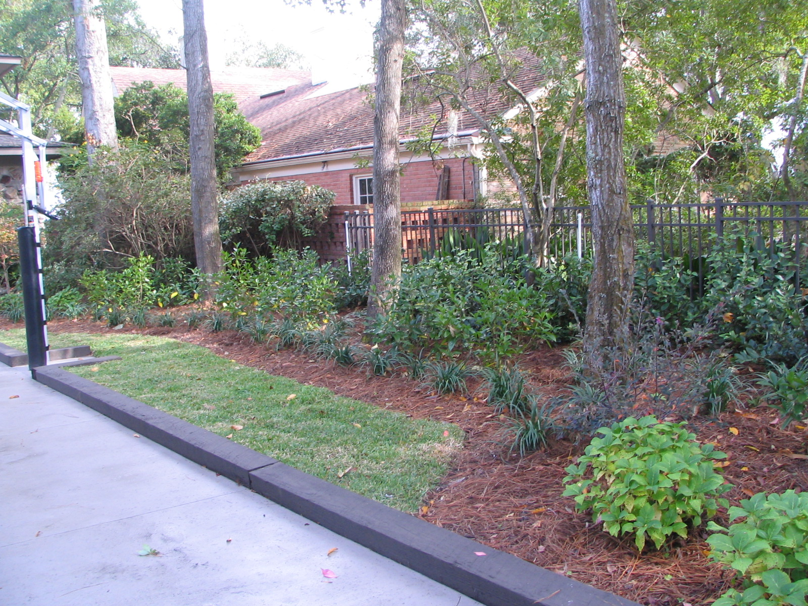 Landscaping ideas in jacksonville foxy foliage for Garden design jacksonville fl