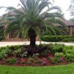New pentas add color and interest to the curb appeal